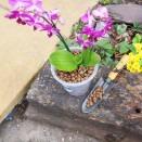 Deco-Pak Horticultural Lytag