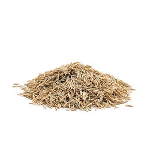 Show Lawn Grass Seed