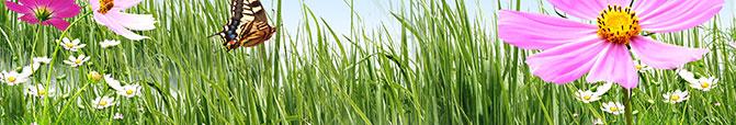 Garden Fertiliser & Grass Seed