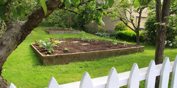 How To Grow Fruit And Veg In The Yard