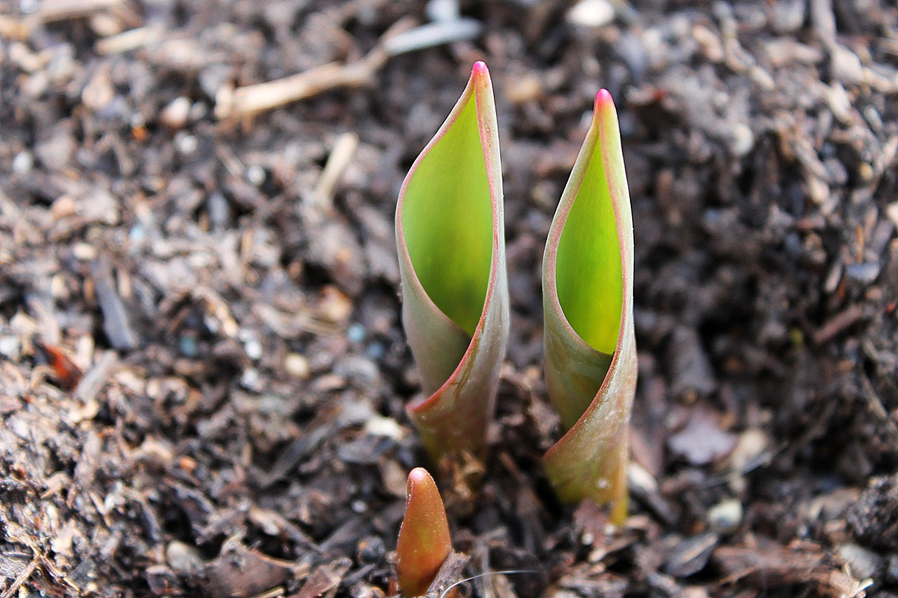 How to Achieve More When Spring Cleaning Your Garden