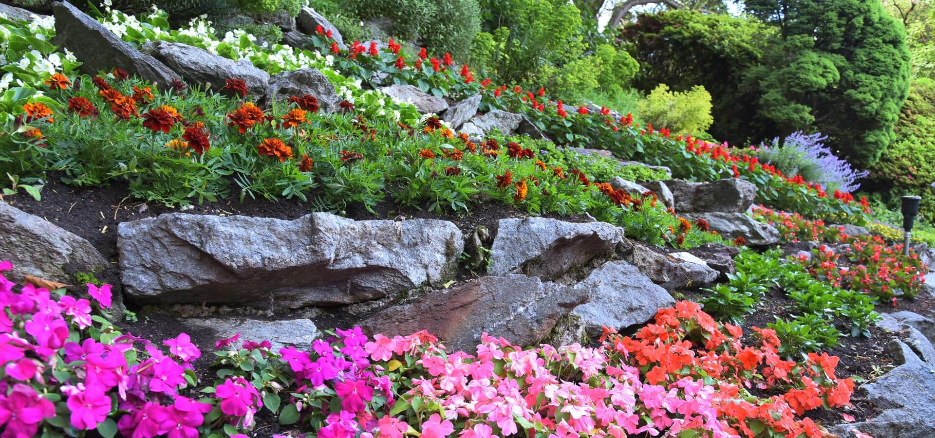 What plants are best for a rockery? Our guide