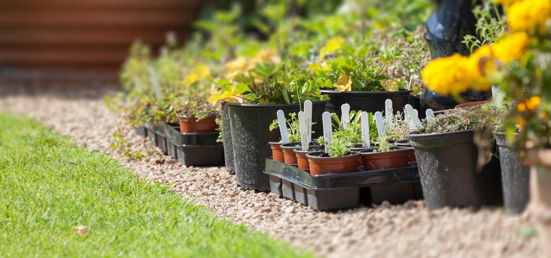 Gravel garden ideas for small backyards